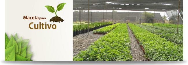 macetas de cultivo para viveros