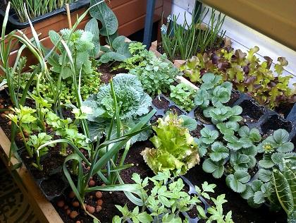 Macetas jardines y huertos comunitarios para cultivar - Huerto en casa macetas ...