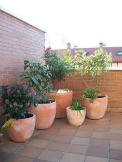 C mo elegir plantas para colocar en macetas grandes blog for Plantas para macetas grandes de exterior