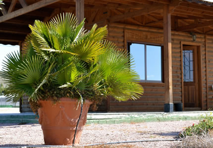 C mo elegir plantas para colocar en macetas grandes blog for Plantas de exterior en maceta
