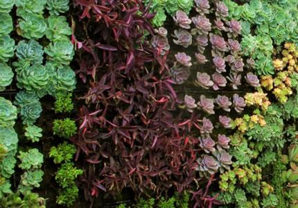 Muros verdes sus beneficios blog y noticias for Plantas para muros verdes verticales