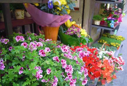 Plantas de interiores con flores blog y noticias - Plantas de exterior con flor ...