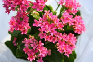 Plantas de interiores con flores blog y noticias for Plantas exterior todo el ano