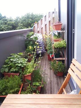Consejos de jardineria para enero blog y noticias for Plantas y arbustos de exterior