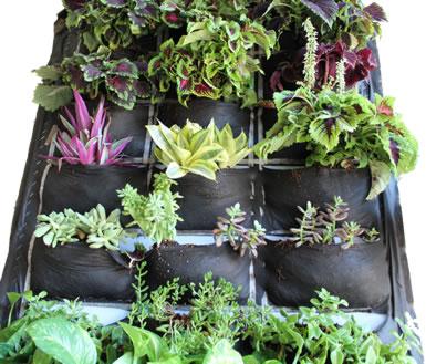 Panel para muros verdes productos nuevos - Como hacer un muro verde ...