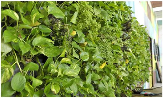 Panel para muros verdes productos nuevos for Muros verdes naturales